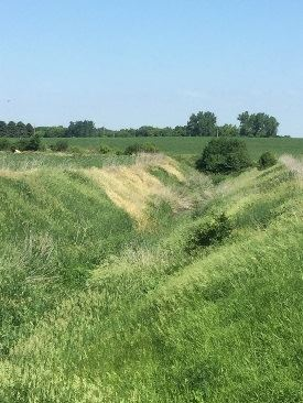 herbicide damage